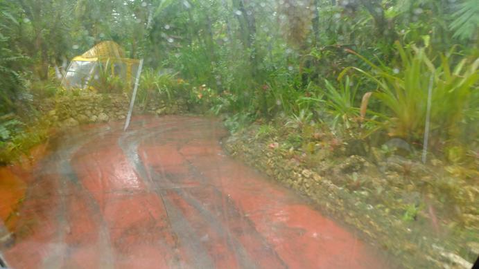 rain_pinapple